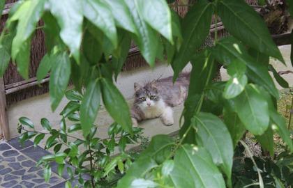 庭に来たニャンコ