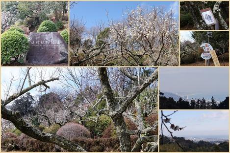 辻村植物園