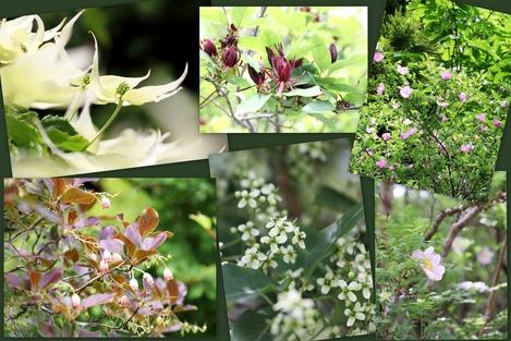 6月の湿性花園
