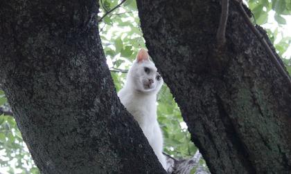 木の上ニャンコ