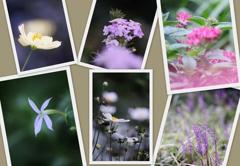 9月のお花たち