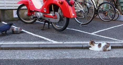 カラスと猫 II
