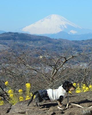 富士山とワンコ
