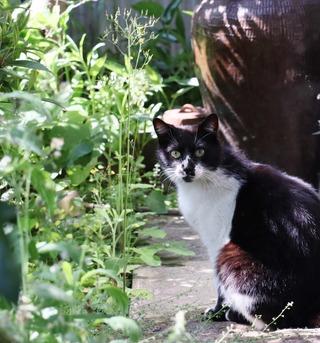 お庭のにゃんこ