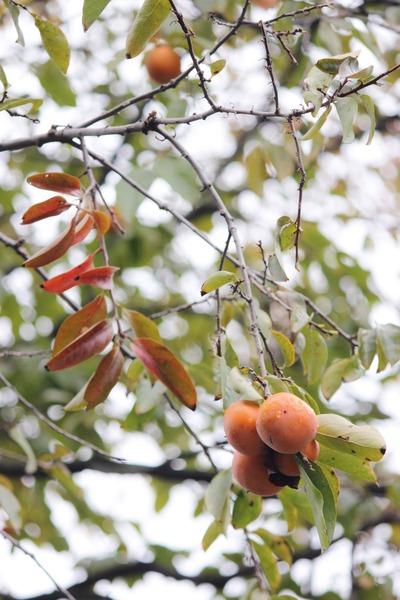 オレンジ色の秋