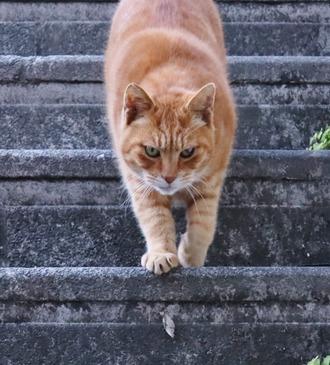 階段にゃんこ