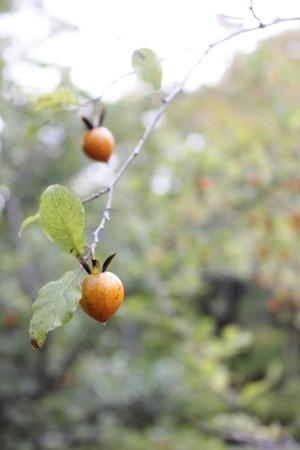 オレンジの実