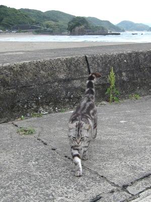 海と猫-2
