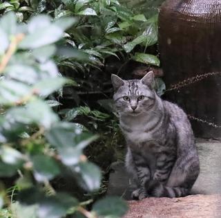 庭にいたにゃんこ