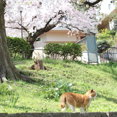 桜とたまちゃん