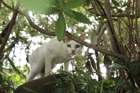 小田原城の猫-2