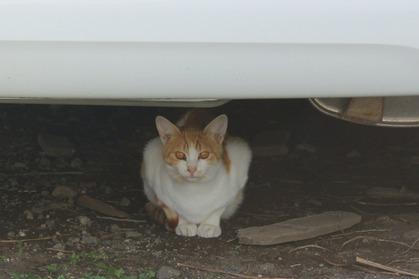 車の下は安全地帯
