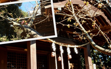 吾妻山神社