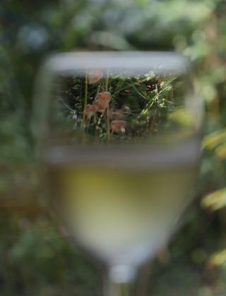 グラスの向こう