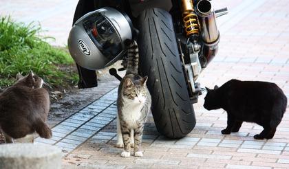 みんなバイクが好き