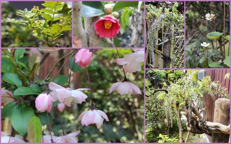 4月の実家の庭