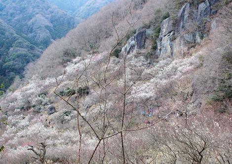 Rock Climbring