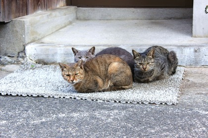Trio the Cats PartII