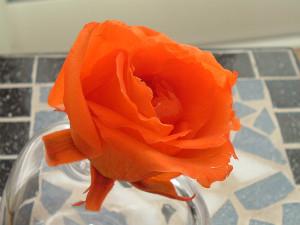 sバラ オレンジ