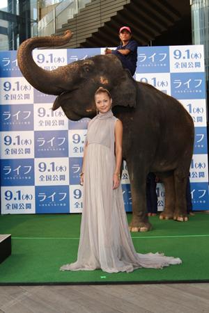 映画『ライフ ―いのちをつなぐ物語―』アニマルプレミアにて、土屋アンナと象のランディ。