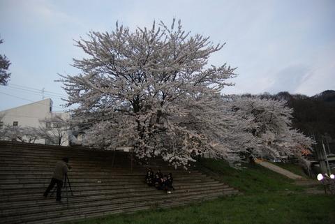 桜の下で撮影