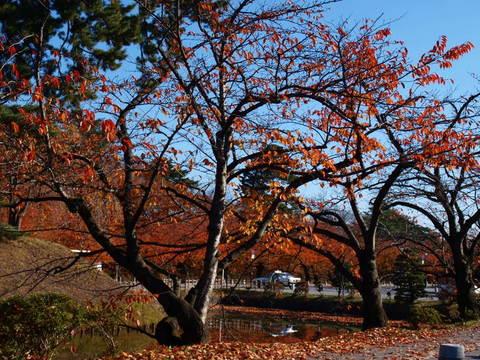 弘前城外濠の紅葉