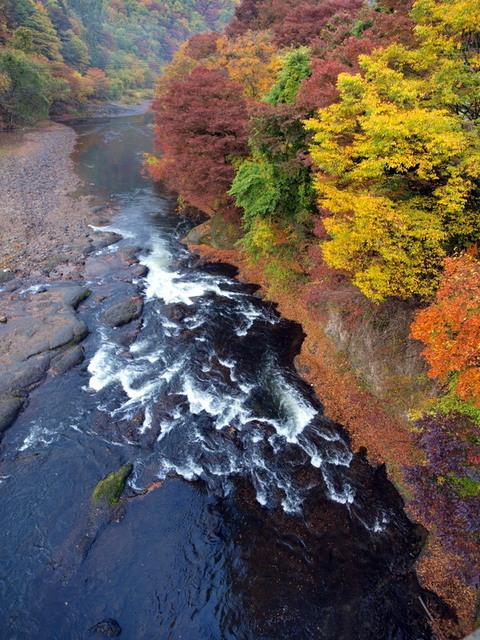 馬淵川の紅葉
