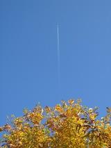 飛行機雲と紅葉