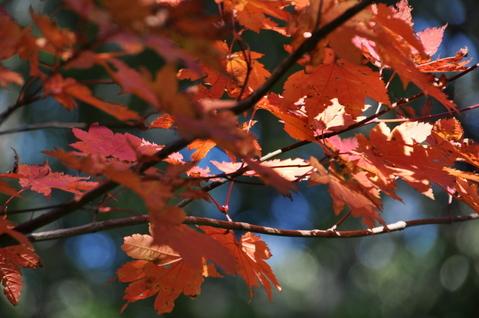 折爪岳の紅葉