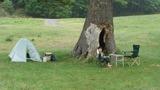 大木の下で設営