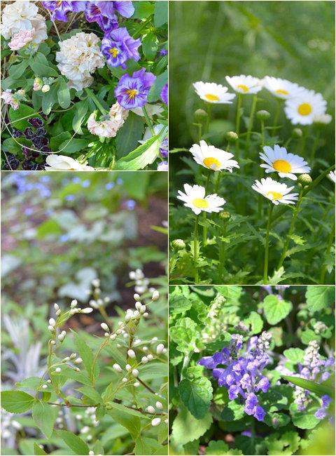 四月の庭web