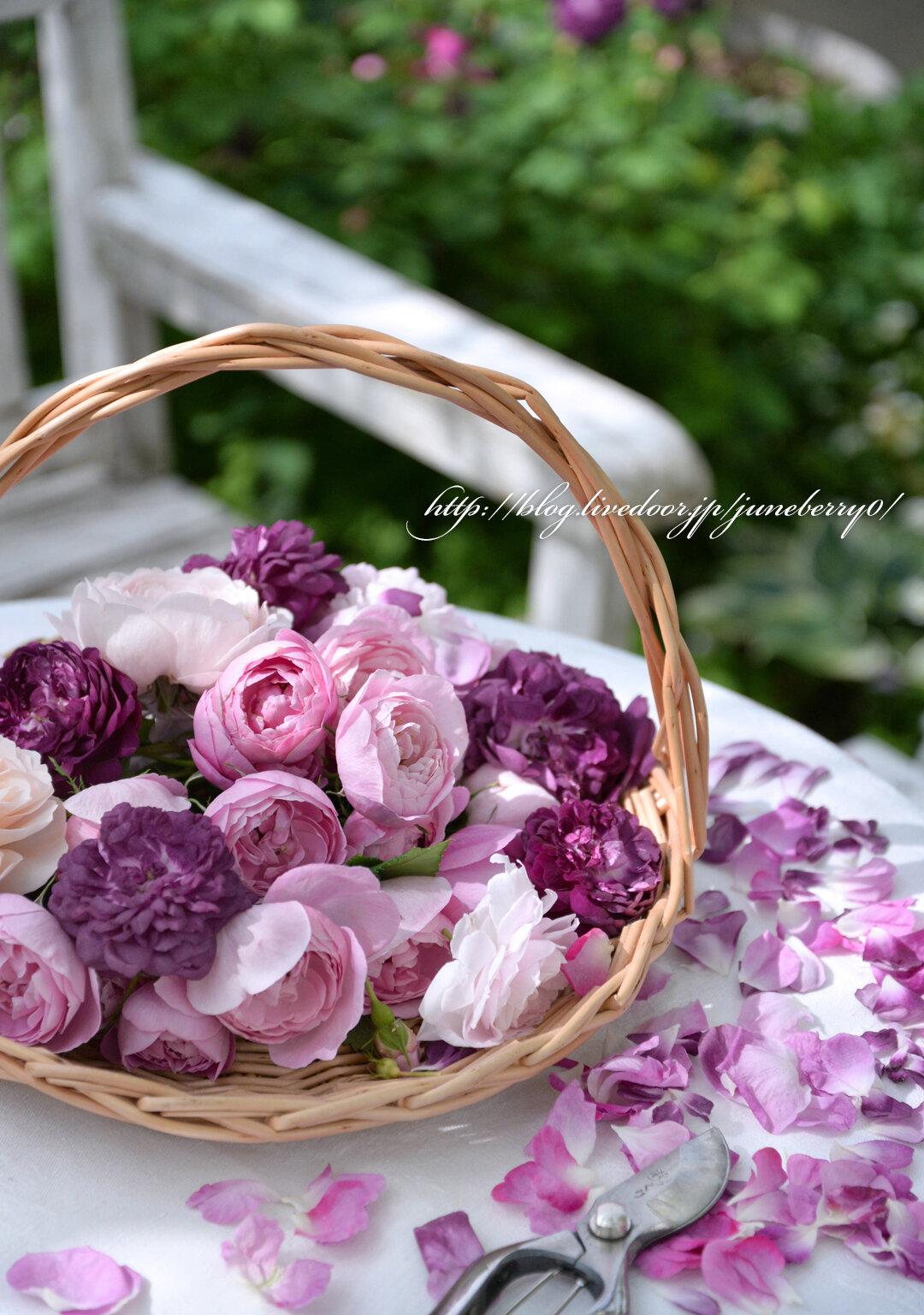 バラの花を摘んで01web