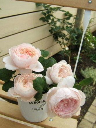 クイーンオブスウェーデン一番花の季節も一番花はすべて終わり