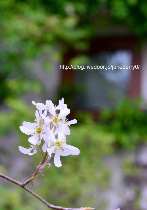 ジューンベリー03web