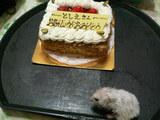 ケーキでちぃ
