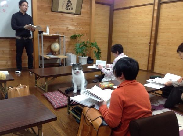 猫のいる教室2