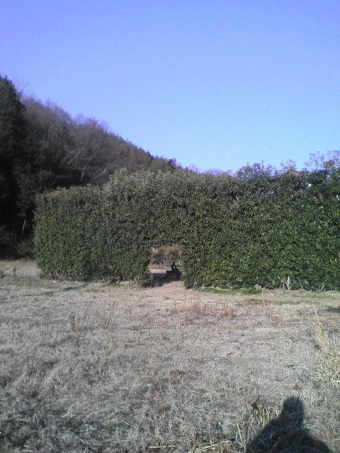生垣の素晴らしさ ー植物という結界で守る家運ー