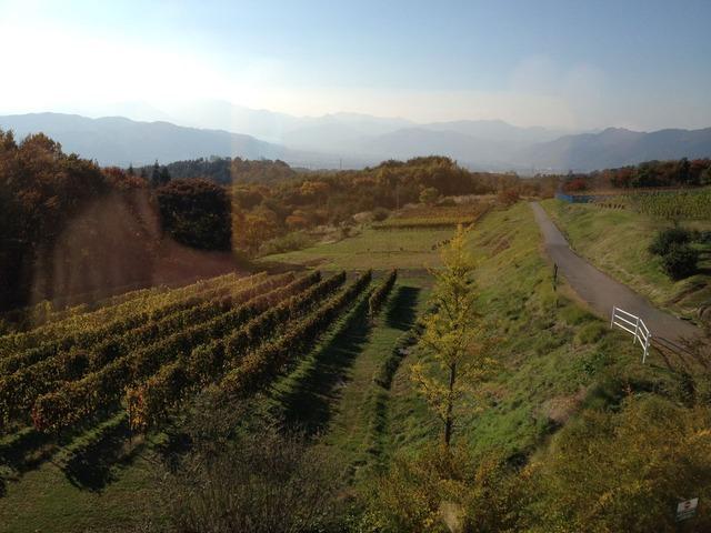 ヴィラデストファームからブドウ畑