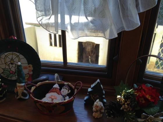 出窓&ユリ2