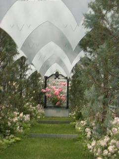 国バラ12-3天使の庭2