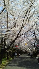 image_suehiro