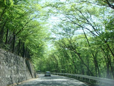 *新緑のいろは坂と華厳滝*