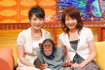 チンパンニュース