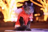 May Christmas_2