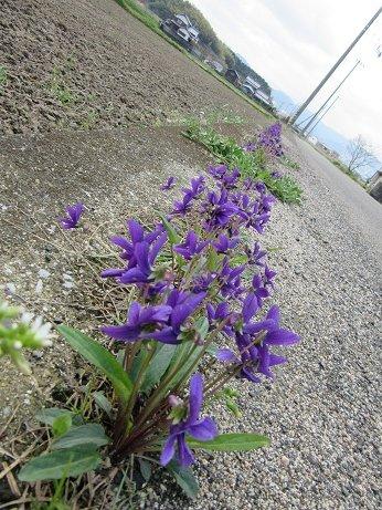 春の野の道散歩