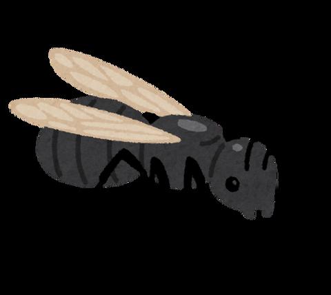 bug_ari_haneari[1]