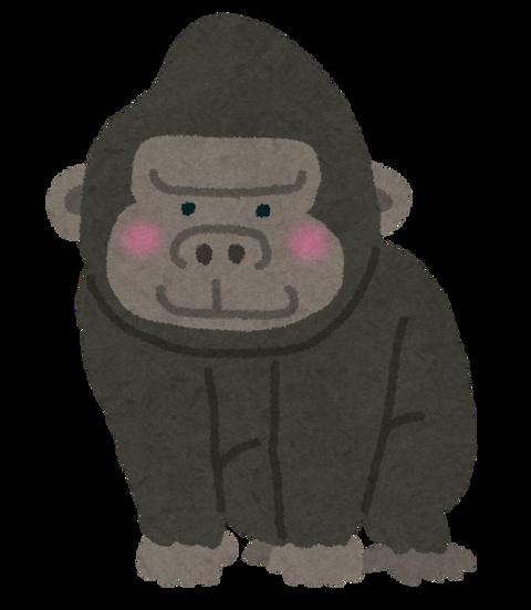 animal_gorilla[1]
