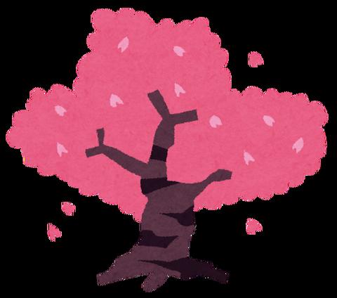 sakura_tree[1]