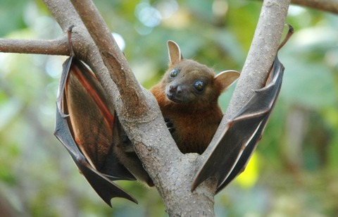 10-amazing-facts-you-didnt-know-about-bats-9[2]