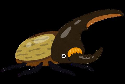 bug_kabutomushi_hercules[1]